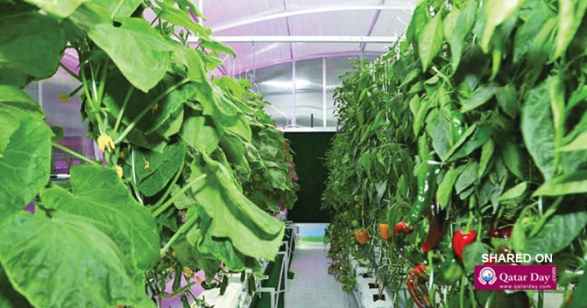 Qatar young farmers all set to export vegetables to Europe soon