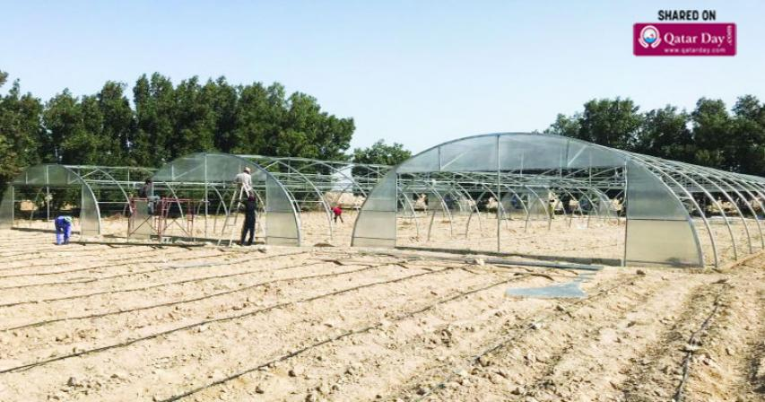 350 greenhouses installed in 85 local farms, says MME