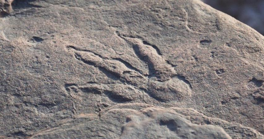Dinosaur footprint found by girl, four, on Barry beach