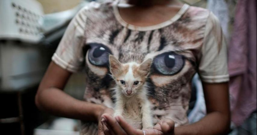 Cuba approves animal welfare law after civil society pressure