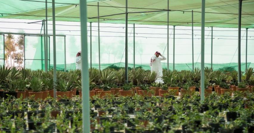 60 kinds of diverse trees and shrubs housed in Umm Salal