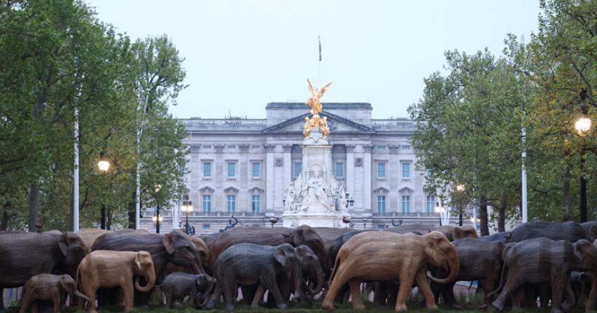 Herd community? Elephants show us how to coexist