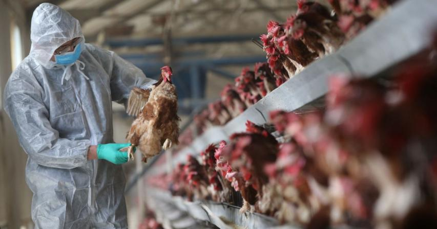 China reports H5N8 avian flu in wild birds in Shaanxi province