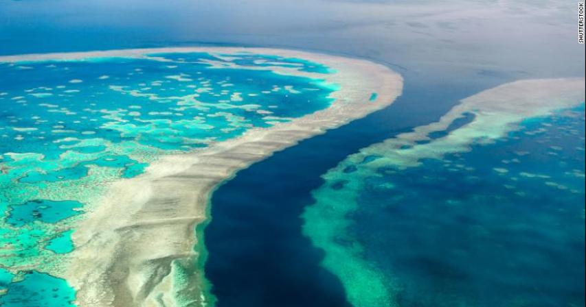 The Great Barrier Reef is in 'danger,' UN says. Australia disagrees