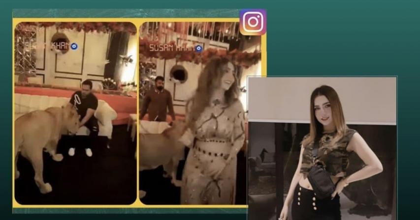 Influencer uses a lioness as a 'party prop', triggers outrage online