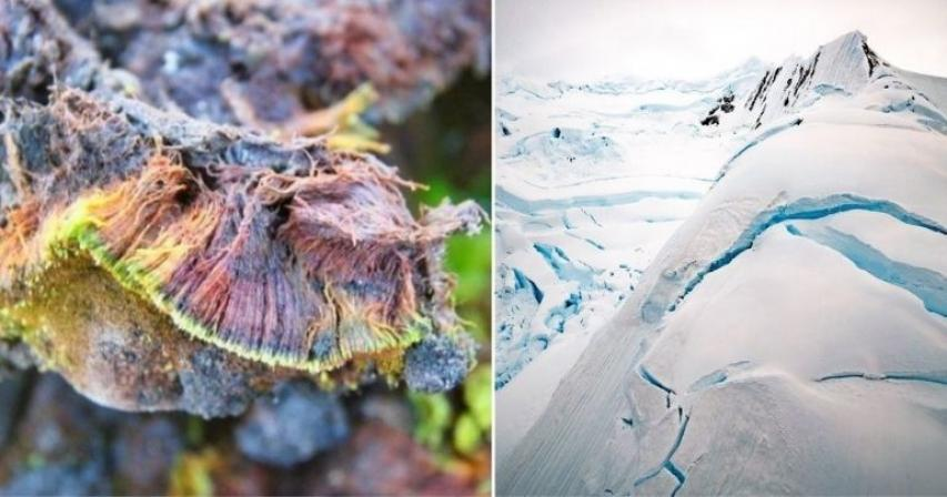 India discovers new plant species in Antarctica