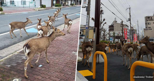 Animals Start Roaming The Cities While People Quarantine Themselves At Home