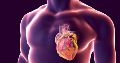 7 Simple Steps to Avoid a Heart Attack