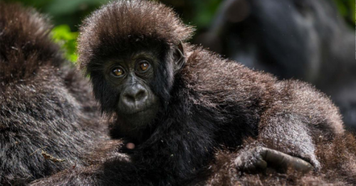 Human activity has wiped out two-thirds of world's wildlife since 1970, landmark report says