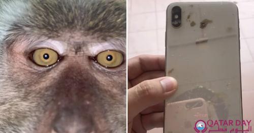Monkey taking selfies