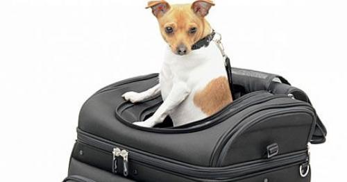 A Quick Buying Guide to Motorcycle Pet Carriers