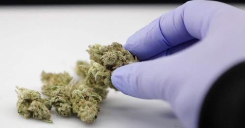 580gm marijuana found in parcel going to Qatar via Mumbai, India