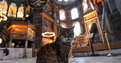 Hagia Sophia's beloved feline of 16 years dies after short illness