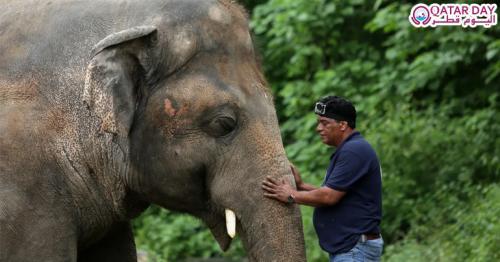 world's loneliest elephant'