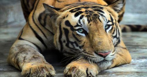 World Wildlife Conservation Day 2020