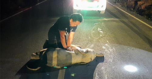 Thai man revives baby elephant with CPR after motorbike accident