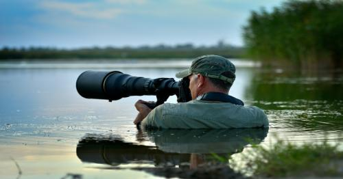 5 tips for ethical wildlife photography