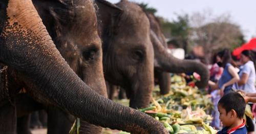 Thailand celebrates Elephant Day, hoping tourists will return