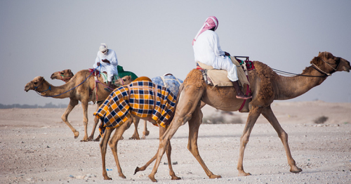 Ministry of Commerce and Industry Announces Investment Opportunities in New Camel Market