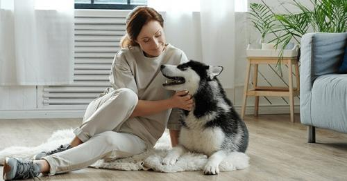 Dog-Friendly Apartment, Apartments for Dogs, Dogs Apartment for rent, Dogs Apartment