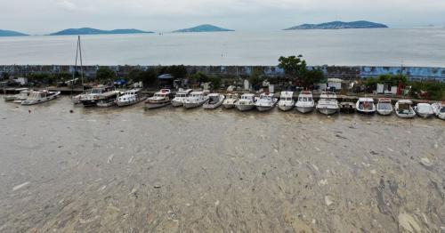 Turkey says it will defeat 'sea snot' outbreak in Marmara Sea
