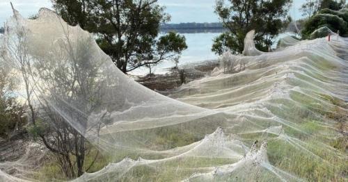Spider webs blanket Australian landscape after floods