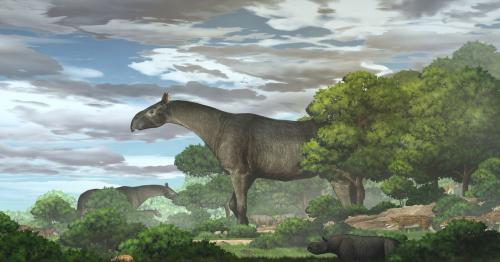 China fossils show new species of extinct giant rhino that roamed Asia