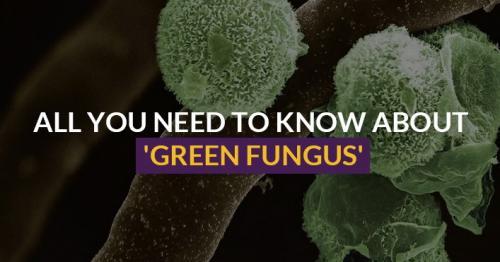 Green Fungus, Aspergillosis, India fungus, COVID-19 fungus, COVID-19