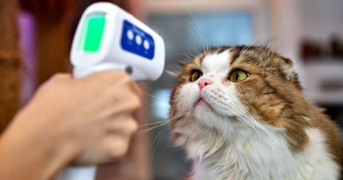 Covid common in pet cats and dogs, study finds